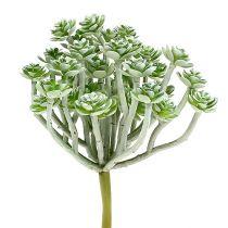 Succulente Echeveria 17cm grigio 3 pezzi