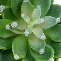 Pietra succulenta rosa verde Ø10cm H11cm 3 pezzi