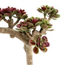 Succulente L 20cm verde-viola