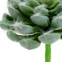 Verde succulento Ø8,5cm L13cm