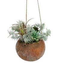 Verde succulento in vaso per appendere 24 cm