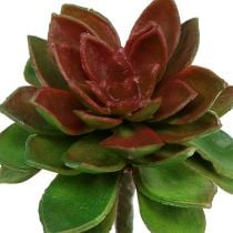 Pietra succulenta rosa 6 cm verde 6 pezzi