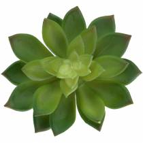 Semprevivo succulento verde 14cm