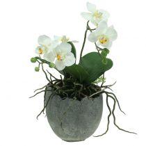 Vaso per piante in cemento guscio Ø14,5cm 15cm 2 pezzi