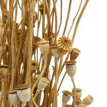Capsule di papavero fiori secchi confezione decorazione essiccazione selvatica naturale essiccata 100g