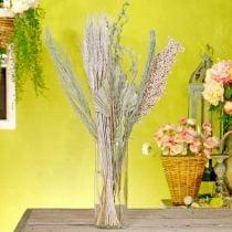 Miscela di fiori secchi esotici bianco-natura, miscela di flora secca