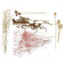 Scatola di fiori secchi Set di fiori secchi misti bianco-rosa
