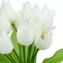 Cespuglio di tulipano bianco 30 cm