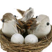 Nido di uccello con uova e uccelli 6 pezzi