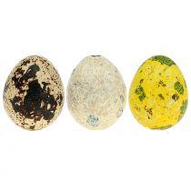 Assortimento di uova di quaglia giallo, naturale 3 cm 72 p