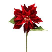 Stella di Natale rossa 70 cm