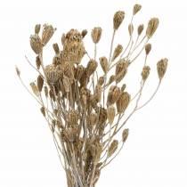Mazzo di fiori di campo, achillea naturale, bianco lavato 30–60 cm 150 g