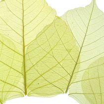 Willow Leaves Skeletonized Yellow Mix 200 pezzi