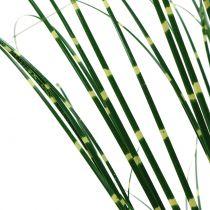 Erba zebra in vaso verde 60cm
