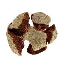 Coni di cipresso naturale 3cm 500g
