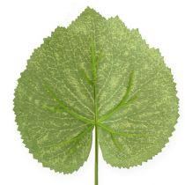 Foglie di piante decorative Galax L10cm L22cm 24pz