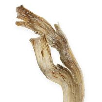 Natraj antler mix di legno sbiancato 10 pezzi
