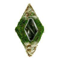 Rizoma pianta cuscino muschio 34 cm x 19 cm 2 pezzi