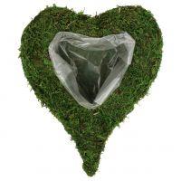 Muschio di cuore vegetale 28 cm x 23 cm