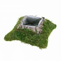 Piantare muschio cuscino, corteccia 20 cm × 20 cm