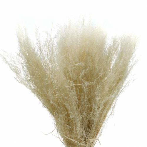 Erba secca Agrostis sbiancata 80g