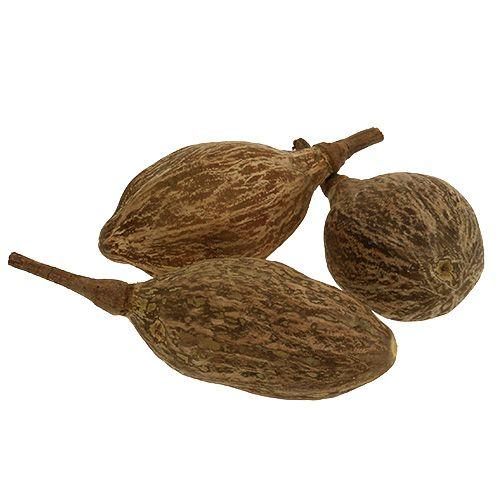 Baobab frutta sbucciata 15 cm - 20 cm natura 5 pezzi