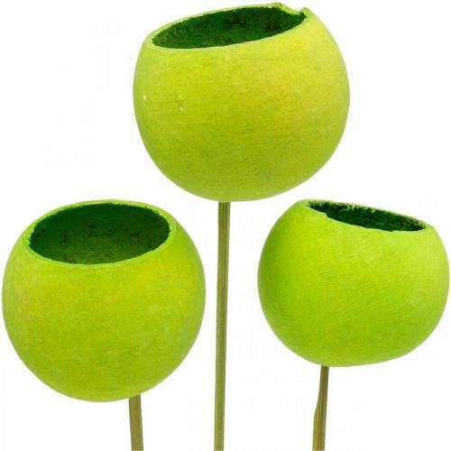 Campana Coppa su stecco Verde essiccato esotici 15pz