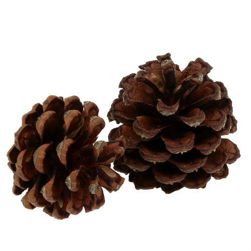 Pigne di pino mugo piccole naturali 1kg