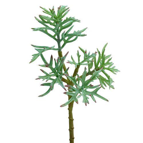 Echeveria 33cm verde chiaro