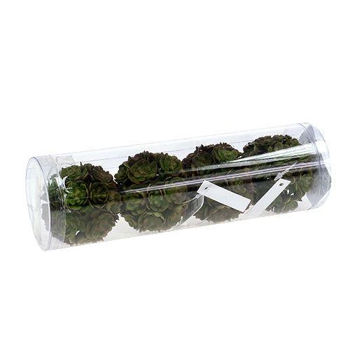 Echeveriaball 5cm Verde 4 pezzi