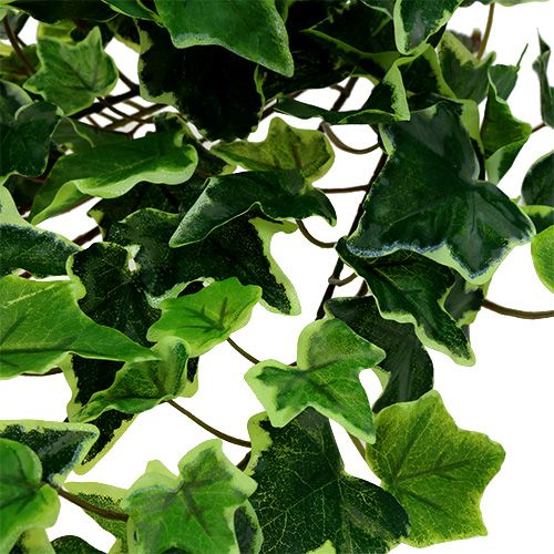 Efeuhänger bianco-verde 70cm