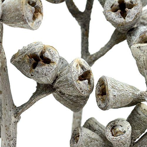 Ramo di eucalipto imbiancato 25pz