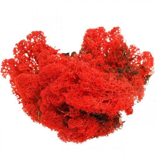 Muschio di renna rosso muschio decorativo per artigianato 400g