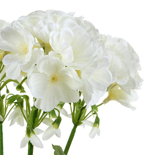 Cespuglio di geranio bianco 36 cm