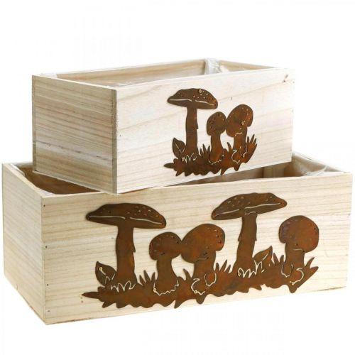 Set di scatole per piante, scatole di legno con funghi, decorazione autunnale, acciaio inossidabile L40 / 30cm, set di 2