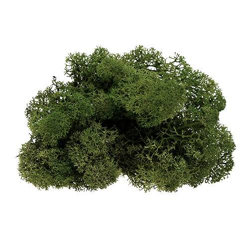Muschio renna verde muschio 500g