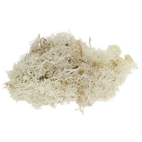 Moss Islandmoss sbiancato 500g