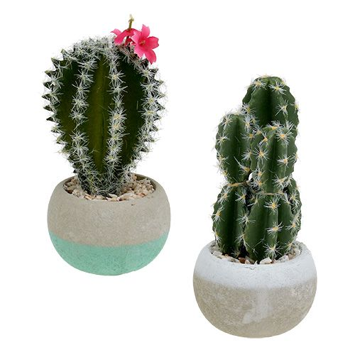 Cactus in vaso Mix H13cm 4 pezzi
