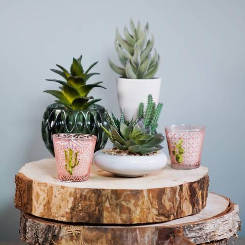 Cactus in vaso Ø12cm 1pz
