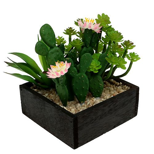 Cactus con fiore 14cm in scatola di legno