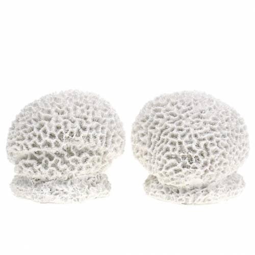 Decorazione marittima corallo gesso bianco Ø10cm 2 pezzi