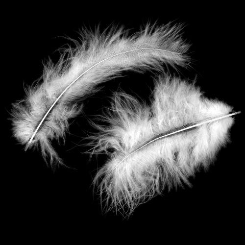 Piume decorative, piume di marabù, decorazioni pasquali, piume per artigianato Bianco 45g
