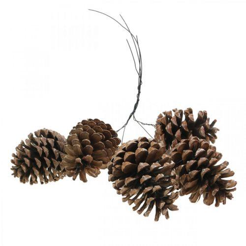 Coni marittimi con filo, giorni della memoria, decorazioni natalizie, prodotto naturale H8–13 cm Ø6–9 cm 50 pezzi