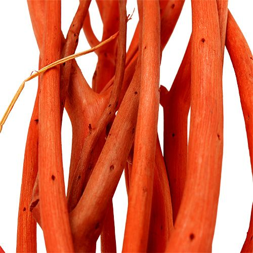 Rami di Mitsumata Arancio 34-60 cm 12 pezzi