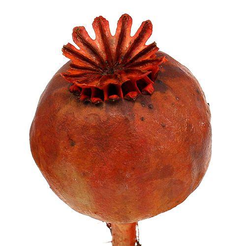Teste di papavero tinte arancio 100p