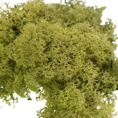 Muschio decorativo per artigianato Muschio naturale verde chiaro stabilizzato 40g