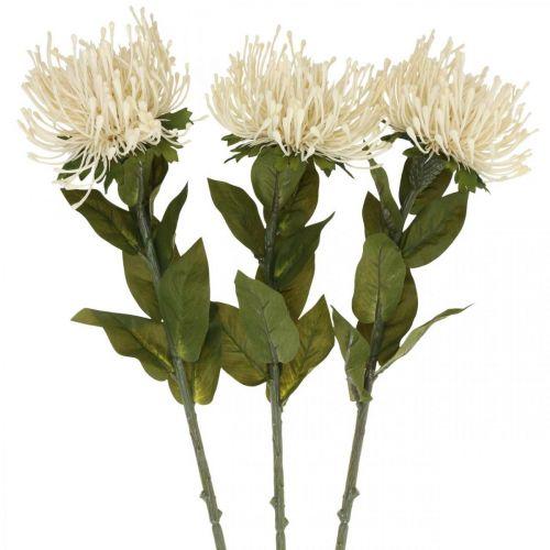 Puntaspilli fiori artificiali esotici leucospermum crema 73cm 3 pezzi
