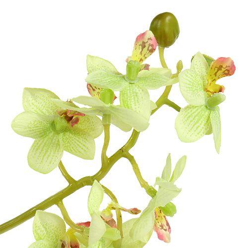 Orchidea 97 cm verde chiaro