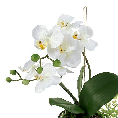 Phalaenopsis dell'orchidea alla crema sospesa H33cm
