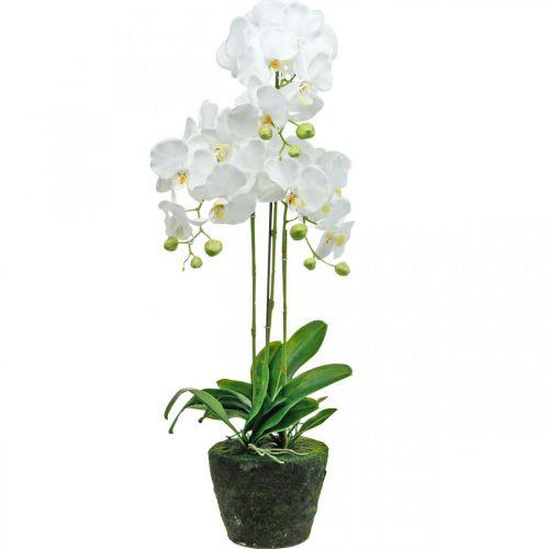 Orchidee artificiali per il vaso bianco 80cm